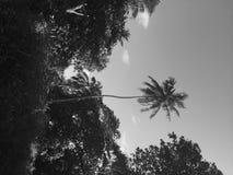 Palmy w tropikalnym miejscu Maldives, Azja obraz stock