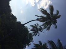 Palmy w tropikalnym miejscu Maldives, Azja zdjęcie royalty free