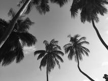 Palmy w tropikalnym miejscu Maldives, Azja zdjęcie stock