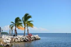 Palmy w wiatrze Fotografia Royalty Free