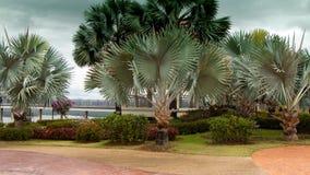 Palmy walkaway i ogród zdjęcia stock