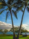 palmy, wyspa Maui, Hawaje fotografia stock