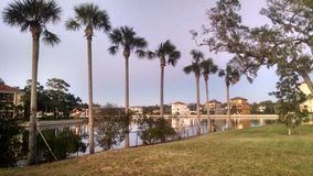 Palmy wzdłuż kanału obrazy stock