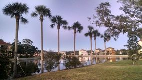 Palmy wzdłuż kanału zdjęcia royalty free