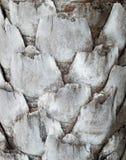 palmy wzoru tekstury drzewo Zdjęcia Royalty Free