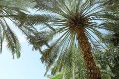 Palmy z bujny zieleni ulistnieniem na słonecznym dniu obrazy royalty free