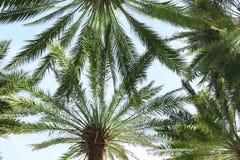 Palmy z bujny zieleni ulistnieniem na słonecznym dniu zdjęcia royalty free