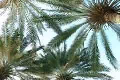 Palmy z bujny zieleni ulistnieniem na słonecznym dniu zdjęcia stock