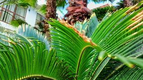 Palmy zieleni liście Zdjęcie Royalty Free