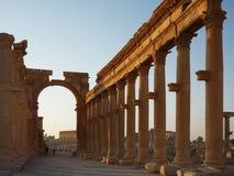 Palmyra στην ανατολή στοκ εικόνα με δικαίωμα ελεύθερης χρήσης