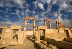 Palmyra Stock Foto's