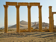 Palmyra Stock Afbeeldingen