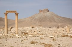 Palmyra Stock Photos