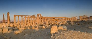 Palmyra Stock Photos