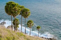 Palmyra Palm Beside Phromthep Cape at Phuket Province, Thailand. Stock Image