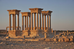 Palmyra ruins. Four ancient columns - archaeological site, ruins, Palmyra, Syria (early morning Stock Images