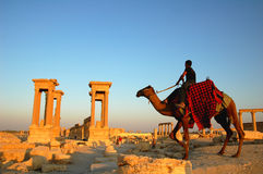 Palmyra Syrië Stock Foto's