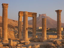 Palmyra, Syrië Stock Foto