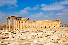 palmyra Syria tadmor Zdjęcia Stock