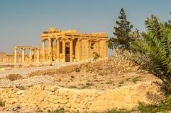 Palmyra Temple Ruins Stock Photography