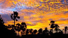 Palmyrah-Palmen am klaren Himmel bei dem Sonnenuntergang stockbild