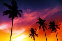 Palmzonsondergang op strand Stock Afbeelding