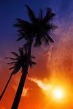 Palmzonsondergang op strand Stock Afbeeldingen