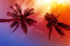 Palmzonsondergang op strand Royalty-vrije Stock Afbeeldingen