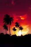 Palmzonsondergang op strand Stock Foto