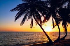Palmzonsopgang Royalty-vrije Stock Afbeelding