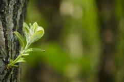 Palo dell'albero un giorno soleggiato luminoso Immagini Stock