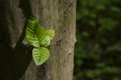 Palo dell'albero un giorno soleggiato luminoso Fotografia Stock