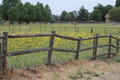 Palo della casetta del paese che recinta con i fiori gialli. Fotografia Stock