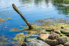 Palo di legno in acqua immagini stock libere da diritti