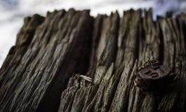 Palo di legno con il numero 57 Fotografia Stock Libera da Diritti