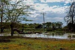 Palo di telefono attraverso la palude dagli alberi dell'acacia Fotografia Stock Libera da Diritti