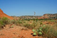 palo duro каньона Стоковое Фото