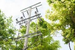 Palo elettrico fra l'albero Fotografia Stock