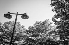 Palo leggero su un fondo degli alberi verdi Immagine Stock