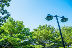 Palo leggero su un fondo degli alberi verdi Fotografie Stock Libere da Diritti