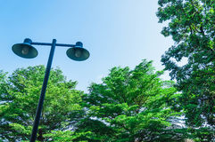Palo leggero su un fondo degli alberi verdi Fotografia Stock Libera da Diritti