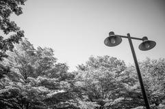 Palo leggero su un fondo degli alberi verdi Fotografia Stock