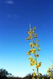 Palo Verde, Arizona stanu drzewo Obrazy Royalty Free