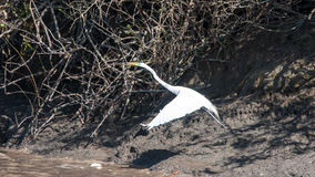 Palo Verde National Park Wildlife Imagenes de archivo