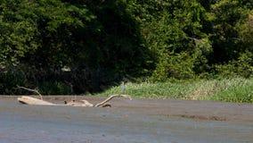 Palo Verde National Park Wildlife Royalty Free Stock Photo