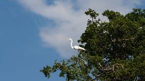 Palo Verde National Park Wildlife Royalty Free Stock Photos