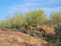 Palo Verde and Red Rock Boulders Stock Images