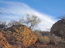 Palo Verde, Sage and Boulders Royalty Free Stock Photo