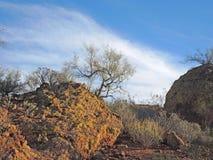 Palo Verde, Salbei und Flusssteine lizenzfreies stockfoto