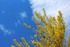 Palo Verde stanu drzewo Arizona obraz stock